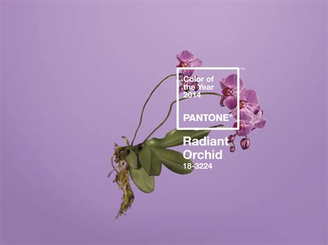 color of the year 2014 pantone color of the year 2014 radiant orchid 187
