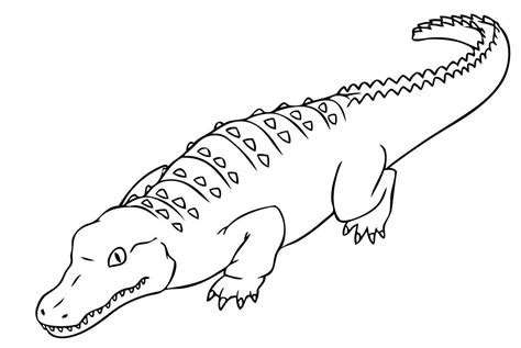 alligator coloring pages preschool crocodile coloring pages to print