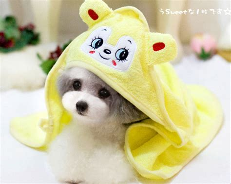 cute dog products 2015 high quality cute small animal pet dogs absorbent