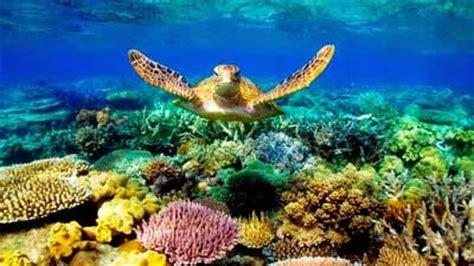 biota laut dan terumbu karang contoh makalah tiada masalah tanpa solusi