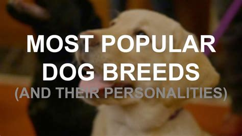 breeds and their personalities top 30 breeds and their personalities houston chronicle