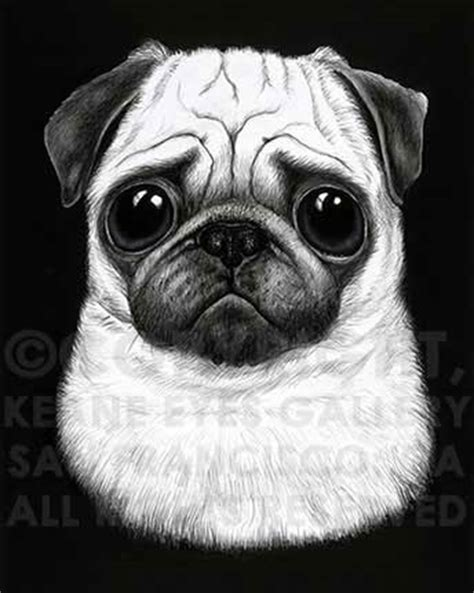 pug black and white black and white pug keane gallery