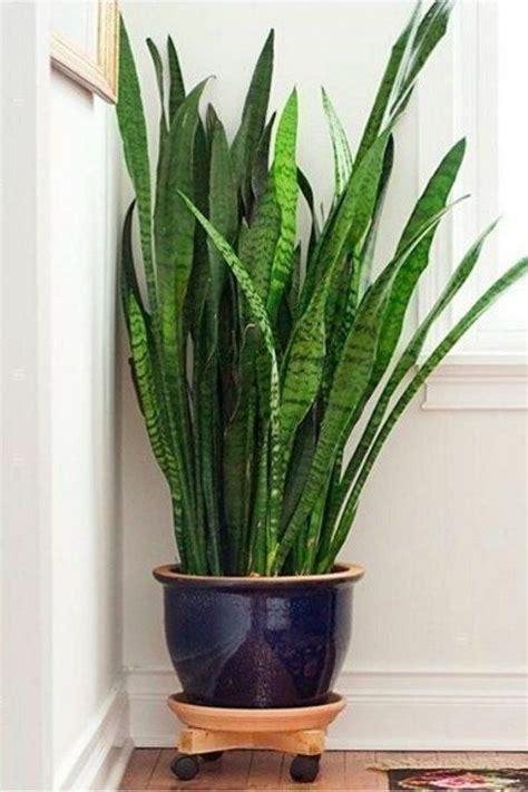 15 beautiful house plants that can actually purify your 73 mejores im 225 genes de plantas de interior en pinterest