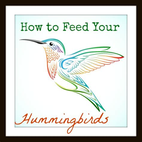 how to feed your hummingbirds nest full of new