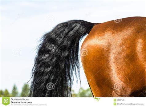 la cola de la parte trasera de la cola de la pierna del caballo foto de archivo imagen 43907608