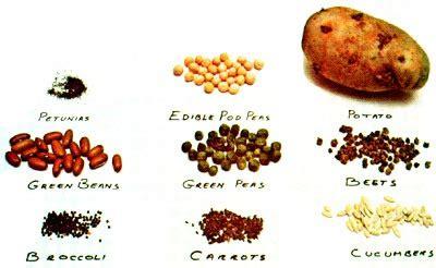 save vegetable seeds in your backyard organic gardening