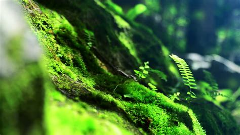 moss definition meaning