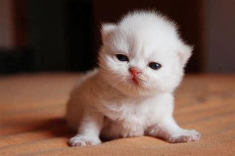 imagenes gatitos hermosos gatitos ermosos imagui