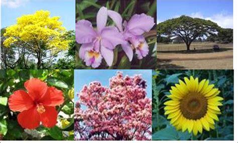 imagenes de venezuela flora y fauna la flora y la fauna
