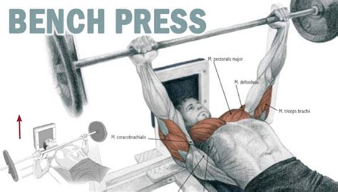 bench press hand placement bench press hand placement 28 images chest muscles