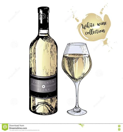 cartoon white wine sauvignon cartoons illustrations vector stock images