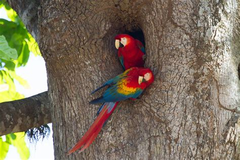 unbelievably splendiferous facts about parrots