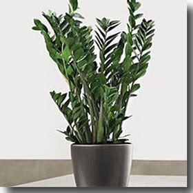 piante da interni poca luce pollice nero 10 piante impossibili da assassinare