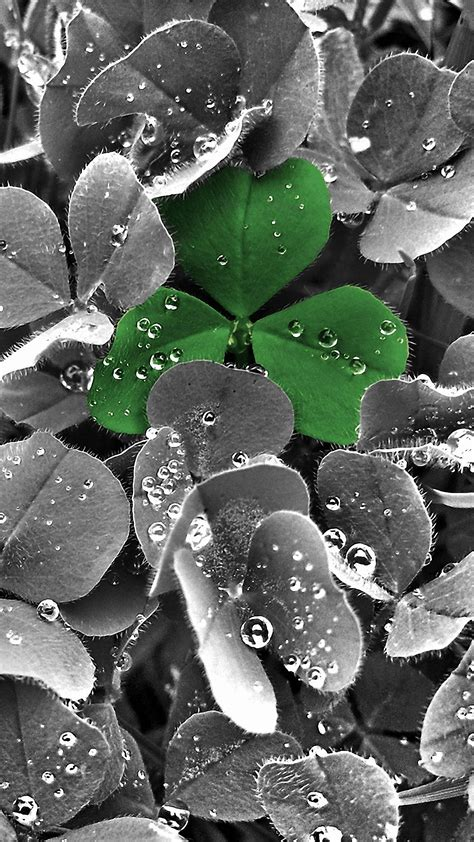 cute green leaf iphone  wallpapers hd