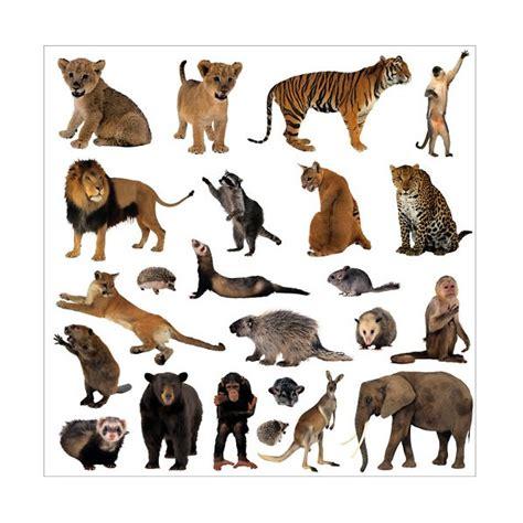 Animal Print Home Decor sticker autocollant lave vaisselle animaux de la jungle