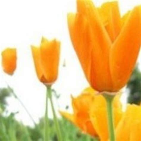 fiori di bach ansia e depressione la naturopatia di simona vignali specialista naturopata