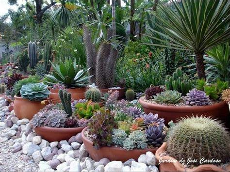 backyard cactus garden best 25 outdoor cactus garden ideas on cacti