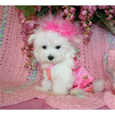 free puppies in mississippi dogs mississippi free classified ads