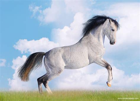 imagenes surrealistas de caballos image gallery imagenes de caballos