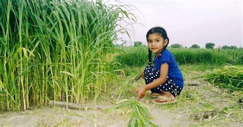 image gallery punjabi boys punjabi baby girl pictures latest pakistani pictures videos