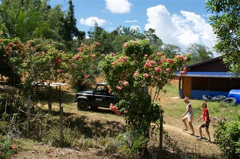 blogger borneo how do you build a gravity fed water system raleigh borneo