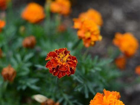Top 10 Common Indian Garden Plants Boldsky Com Indian Garden Flowers