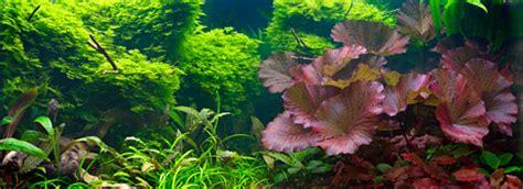 Water Kijang Grand Kijang 7k Aisin aquarium lighting guide metal halide fluorescent compact