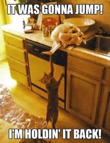 thanksgiving cat meme 9 things cat owners experience on thanksgiving meowingtons