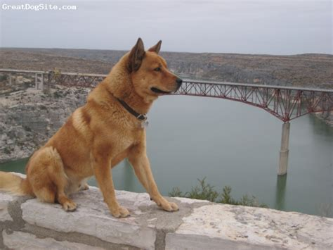 Small Dogs For Home In India A Photo Of A 1 Yr American Indian Best