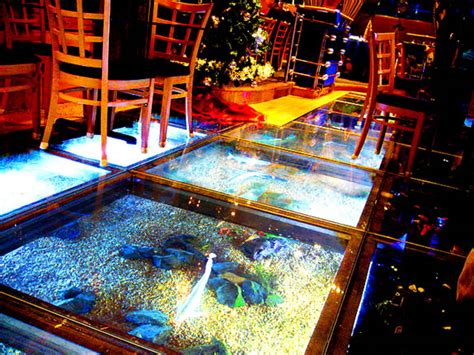 Aquarium Floor 1000 images about glass floors on glass floor