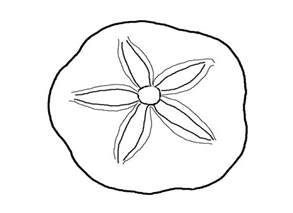 shell coloring pages seashell coloring pages az coloring pages