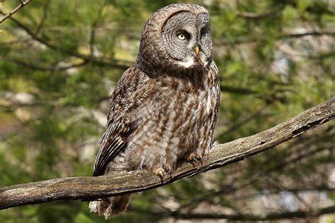 fun facts about owls bird trivia