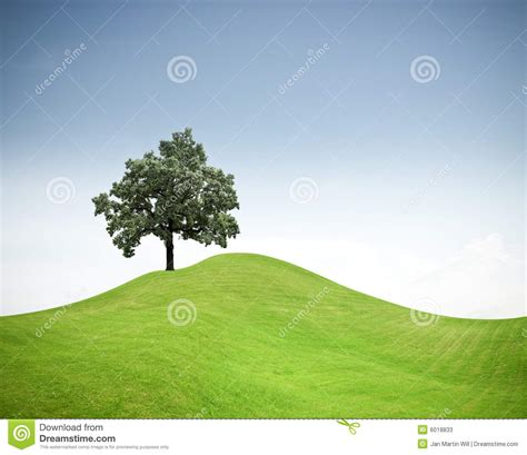 tree   green grass hill stock  image