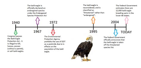 percentage of population bald bald eagles in north america endangerment and recovery