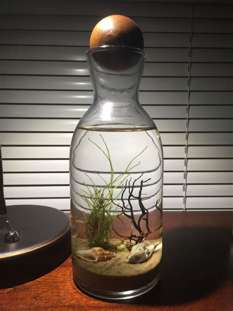 diy ecosystem shrimp fish tank terrarium indoor water