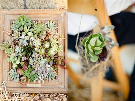Succulent Frame My Farmscape - 17 best images about picture frame planters on