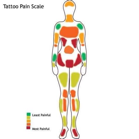 most painful tattoo areas 25 best ideas about chart on
