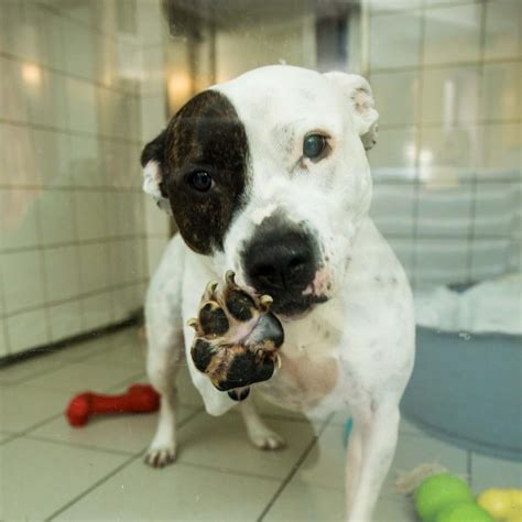 housing for dogs appeal launched to find forever homes for dogs constantly overlooked her ie