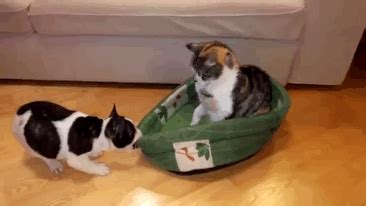 cats  stole dog beds  didnt give  damn