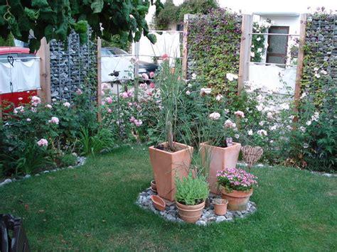kletterrose f 252 r gabionenwand seite 1 rund um die rose