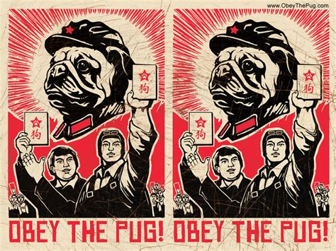 obey the pug wallpaper chairman pug breed and cat t shirts mugs gifts