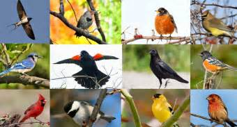 Backyard Birds Of North America by Quiz Can You Name These 20 Common North American Backyard