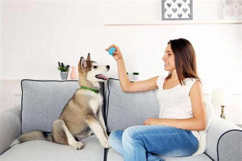 couch training woman dog training couch the persuaded pooch st louis