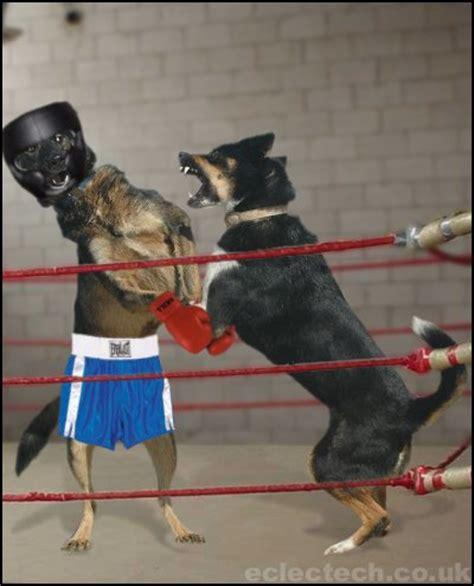 all about puppies ta boxing dogs