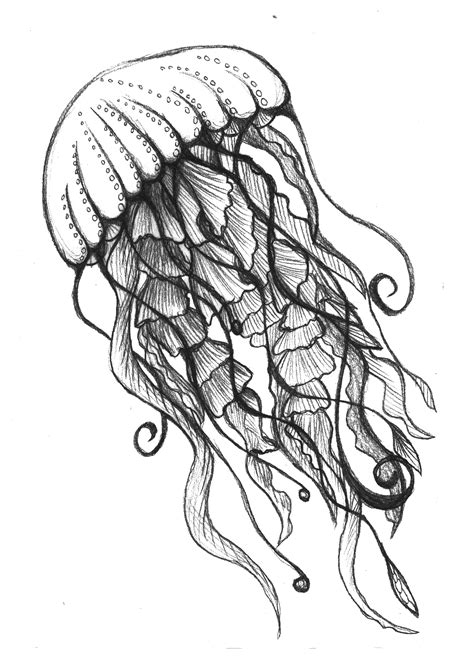 Drawing Jellyfish by Jellyfish Drawing Made By Den Details