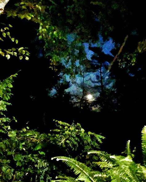 moonlight moon countrylife countryliving summersend