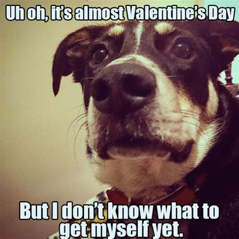 Cute Valentines Memes - 21 dog pictures that perfectly sum up your valentine s day