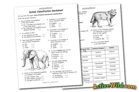 Animal Classification Worksheet by Free Printable Worksheets For Teachers Parents