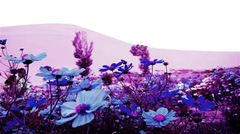 Landscape Pictures Of Flowers Flower Png Landscape By Theartist100 On Deviantart
