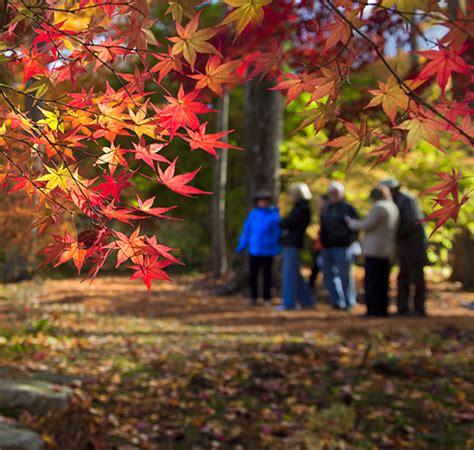open day at steinhardt garden this sunday november 2